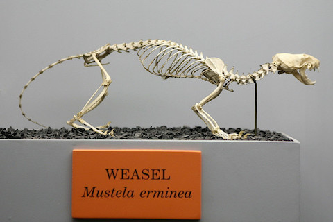 weasel words